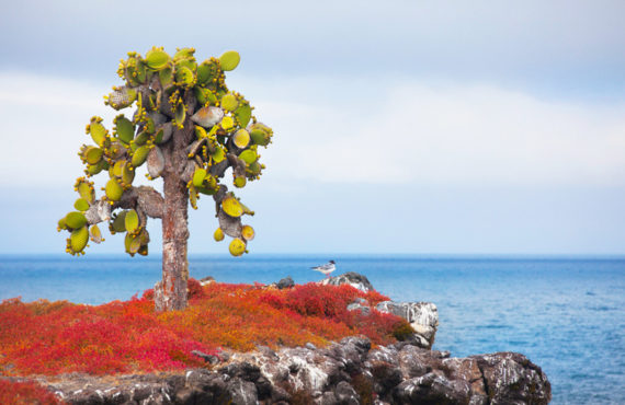 The Galapagos Islands cruise